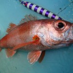 スロージギングで狙う高級魚「アカムツ」